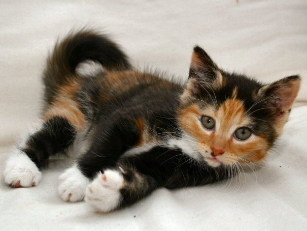 Cute Names For White And Brown Cats